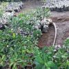 World Environment Day: Spreading green with mangroves