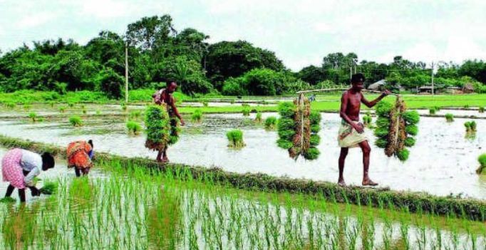 Paddy farmers look to aquaculture for profits in West Godavari