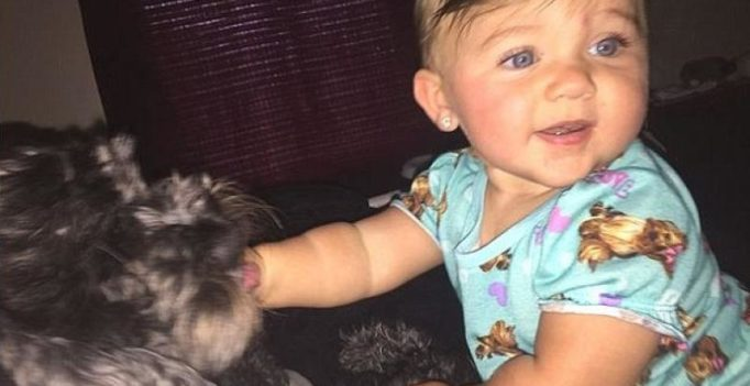 'Hero' dog dies saving baby girl from house fire