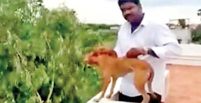 Dog thrown from terrace: Two medicos to pay Rs 2 lakh each to AWBI