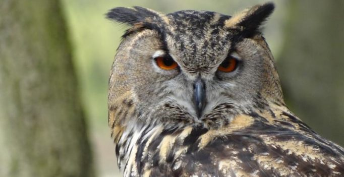 Why some animals are nocturnal decoded