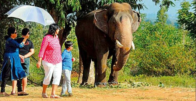 First batch of Dasara jumbos reach Mysuru