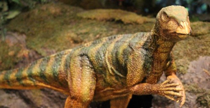 Biggest dinosaur footprint found in South America