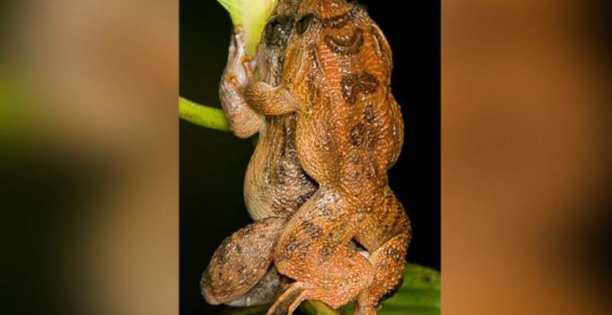 The Kamasutra, froggy style