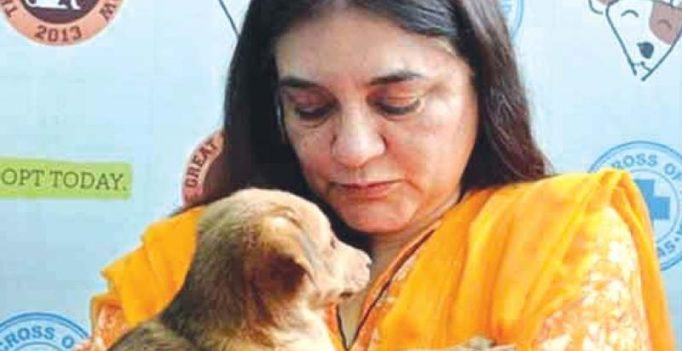 Maneka Gandhi faces netizen rage, Facebook page spammed