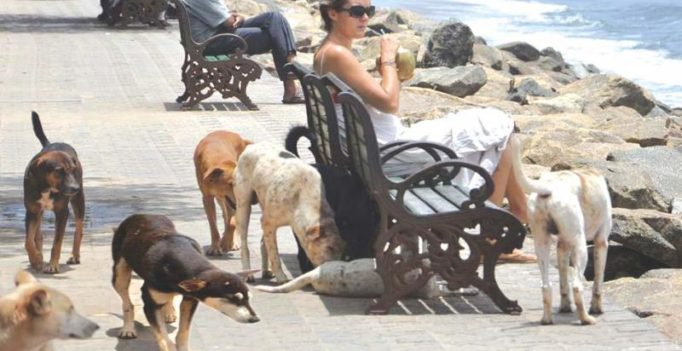 Kerala tourists bat for dog shelters