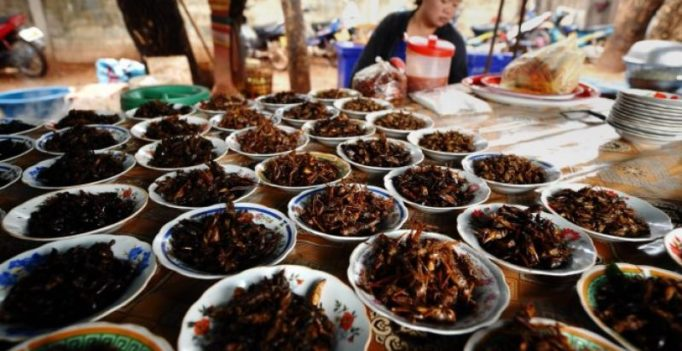 South Korea wants to promote edible insects to increase agricultural income