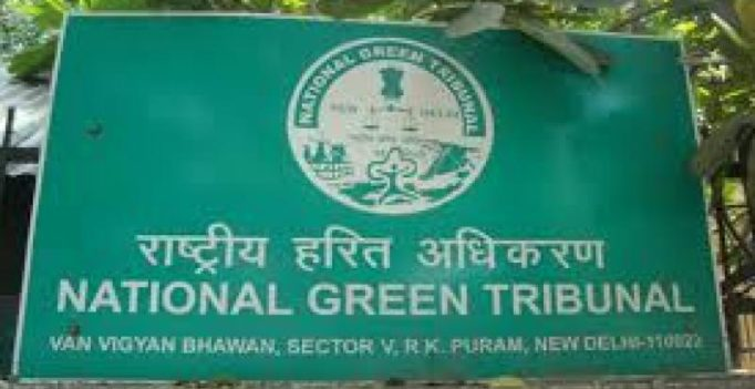 Go ahead with road widening project: National Green Tribunal