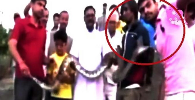 Video: Man narrowly escapes getting hurt while clicking selfie with Python