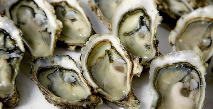 New York to grow oysters on recycled toilets
