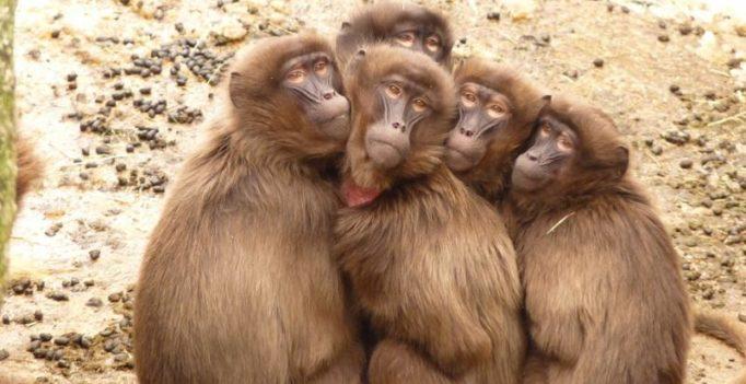 Delhi-based foundation announces award to save monkeys