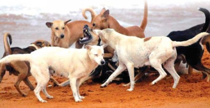 Hyderabad: Dogs kill newborn girl, eat her body