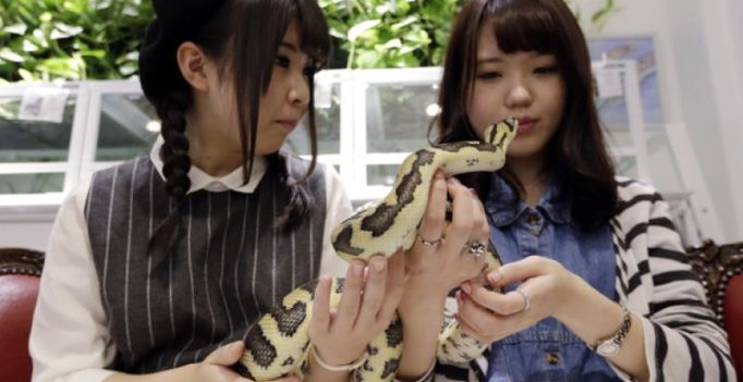 Video: Asian animal cafes now bringing in wild animals