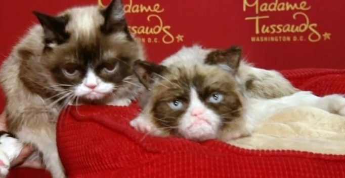 'Grumpy Cat' now has a wax replica at Madame Tussauds