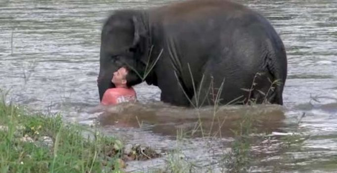 Video: Baby elephant hurries to save human friend from 'drowning