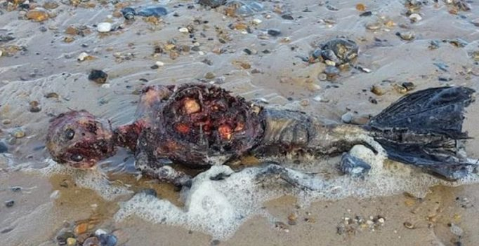 Video: Body of 'dead mermaid' found on beach in Britain