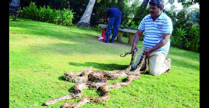 Visakhapatnam: Snake savers urge officials to provide employment