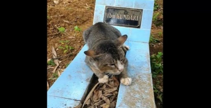 Loyal pet cat has been living near dead owner's grave for a year