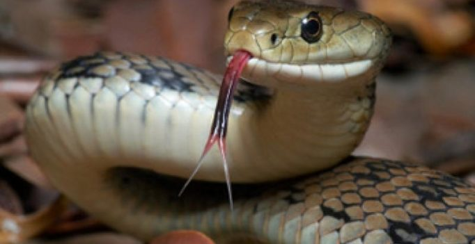 Police stop bus carrying 120 live cobras in central Vietnam