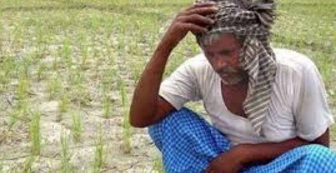 Crop loss: Another farmer dies in Nagai