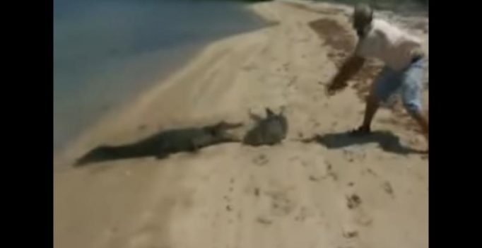 Video: Fisherman battles with crocodile trying to steal shark he just caught
