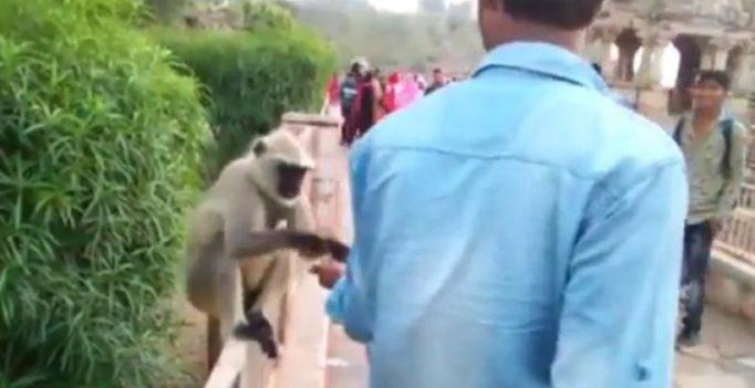 Rajasthan: Man lures monkey with food only to slap it hard in face