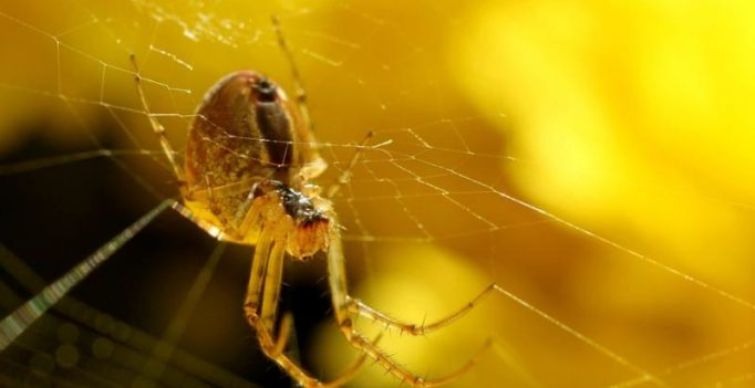 Artificial synthetic spider silk maybe used in wound healing