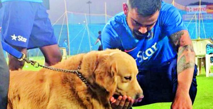 23 sniffer dogs on guard for first England ODI