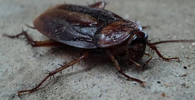 Bengaluru woman claims husband used cockroaches to get her into bed