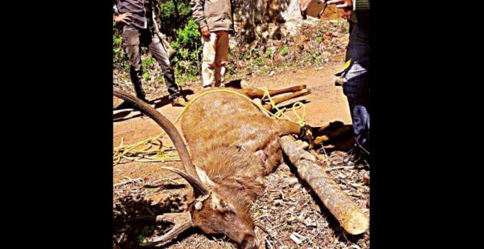 Chikkamagaluru: Deer, deer! Realtor on run after hunt