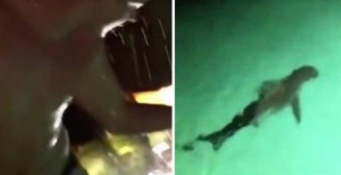 Video: Drunken man jumping into pool full of sharks will freak you out