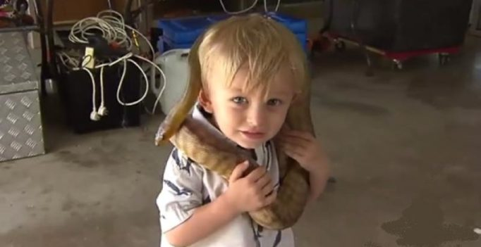 Video: 1-year-old snake catcher from Australia will startle you