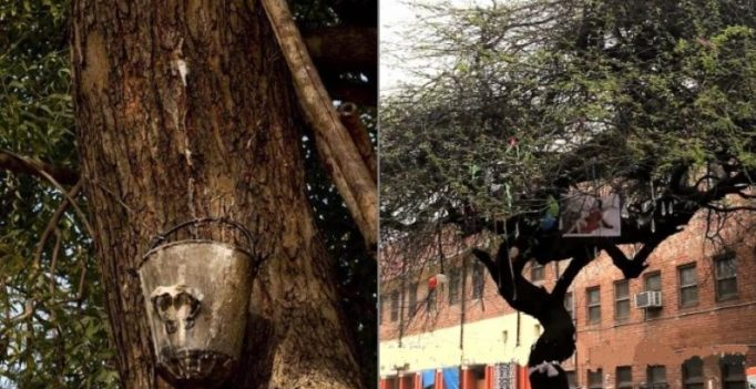 Neem beer from tree in Delhi University has people in high spirits
