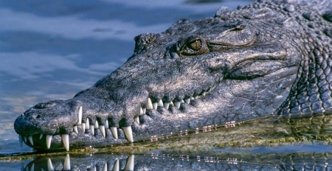 Video: Alligator sneaks in and snatches fish from child in shocking fashion
