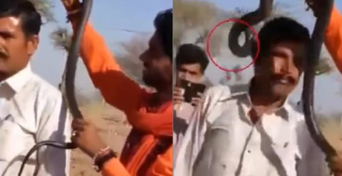 Video: Man loses life as selfie with cobra goes horribly wrong