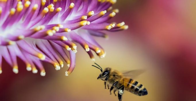 Weird fetish called 'Melissophilia' involves sexual attraction to bees