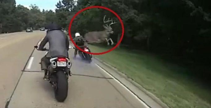 Video: Deer shocks biker by jumping over him to cross road
