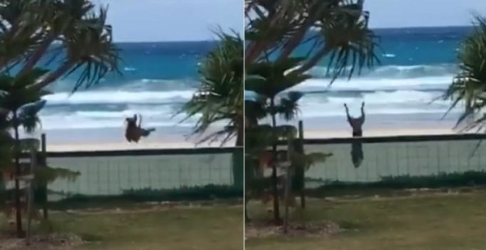 Video: Excited dog somersaulting over fence will make you fall in love with animals