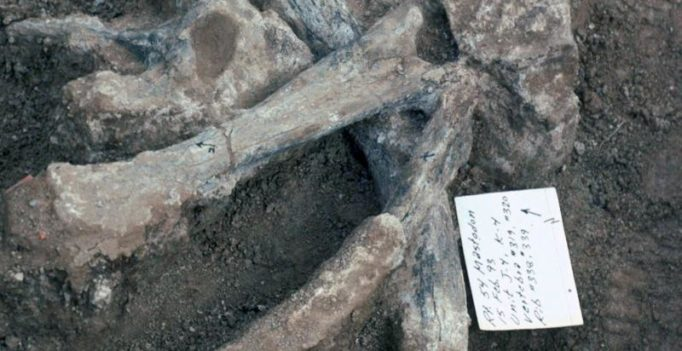 Humans in America '115,000 years earlier than thought'