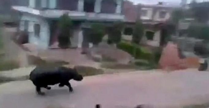 Video: Terrifying scenes as rhino goes on rampage in streets of Nepal