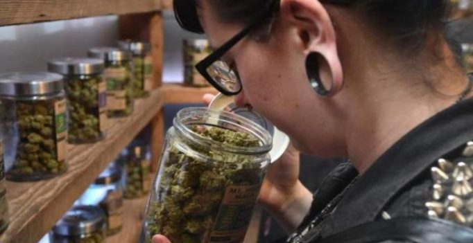 Dementia can be treated using cannabis: study