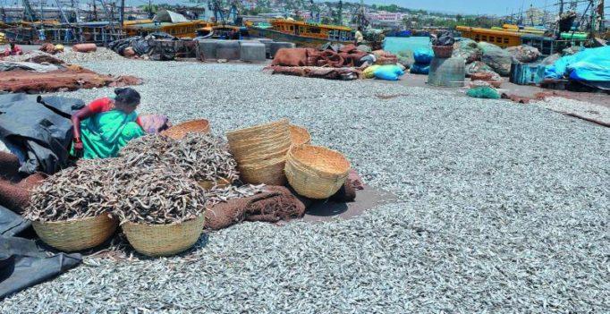 GST may make seafood dearer in Andhra Pradesh