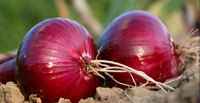 Red onions can help fight against cancer: study