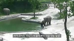 Baby elephant saved by its mother in dramatic rescue at South Korean zoo