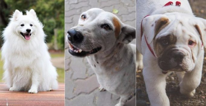 Ten breeds of dogs best suited for city living
