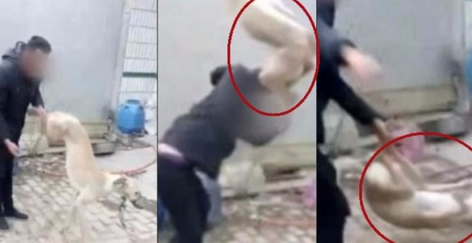 Chinese man beats his pet dog to death, vows to eat it for losing a race