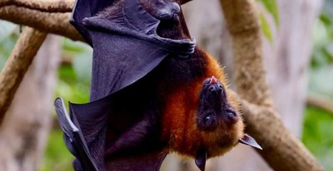 Nipah virus hits Kerala: Here's everything you need to know about disease