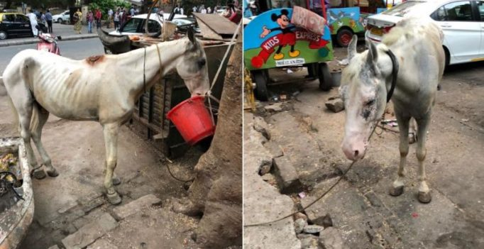 Following PETA alert, Mumbai cops rescue two wounded, malnourished horses