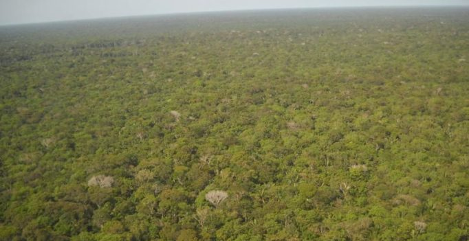 Researchers say older Amazonian forests help regulate global climate