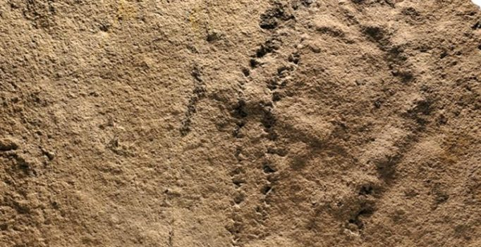 Earliest animal footprints found in China, says study